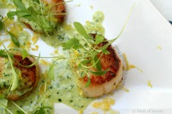 Seared Sea Scallops with Creamy Basil Pesto